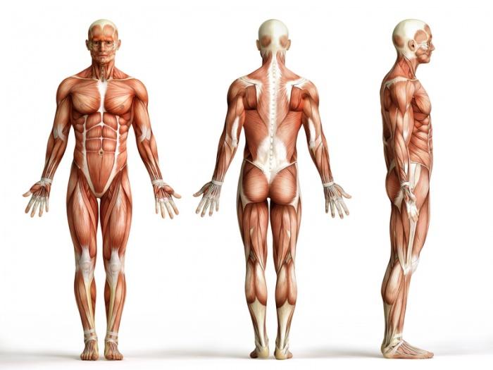 DIY-MedTech Anatomie - Team Fantastic Three - Hackteria Wiki