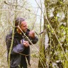 Birch tree sap tapping