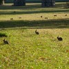 Mestna jaga: Helsinški mestni zajec | Helsinki Rabbit Hunts 4-6. Sep 2014