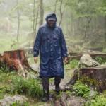 bostjan_forest